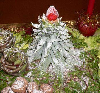 8 abete ciuffo ananas.jpg