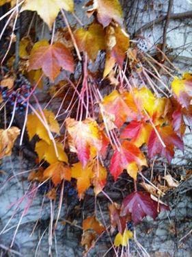 AUTUNNO foglie