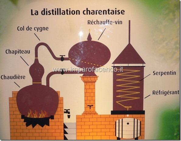 Cognac distillazione Charentaise