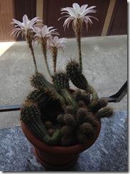 Fiore Vita e Morte in 24 ore4