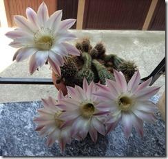 Fiore Vita e Morte in 24 ore5