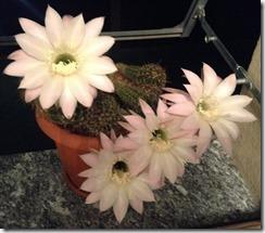 Fiore Vita e Morte in 24 ore6