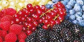 Frutta Frutti di bosco