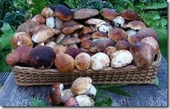 Funghi-cesto