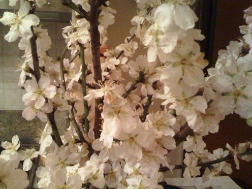 Mandorlo in fiore4