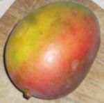 Mango fiore 001.jpg