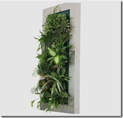 Parete Vegetale Ortisgreen1