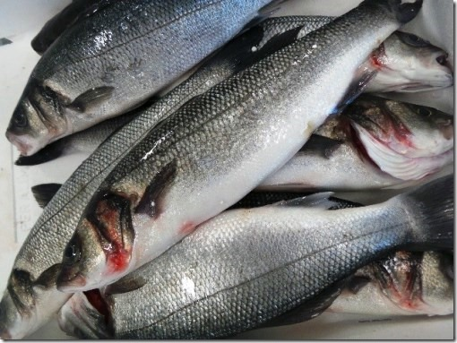 Pesce branzini