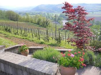 Vini Montesissa 0.jpg
