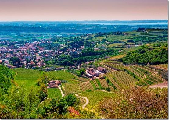Vino, Vitigni in Valpolicella