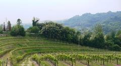 Vino Prosecco Colsaliz ServoSuo1